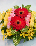 send gifts to bangladesh, send gift to bangladesh, banlgadeshi gifts, bangladeshi  Gerbera With Rose