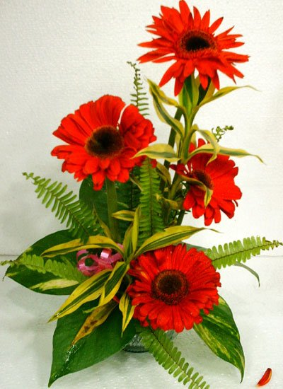 Send Thai Red Gerbera to Bangladesh, Bangladesh Newspaper, Bangladeshi gift, send gifts to bangladesh, send gift to bangladesh